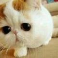 悦Mer_4818777364