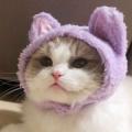 快乐的小猫咪